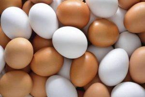 रोजाना कितने अंडे खाएं how many eggs should i eat a day in hindi