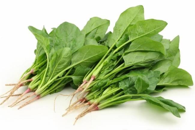पालक के नुकसान spinach side effects in hindi