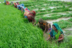 भारत में खेती का महत्व