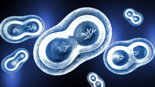 mitosis and meiosis difference in hindi