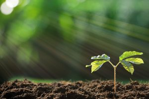 प्रकाश संश्लेषण photosynthesis in hindi
