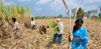 गन्ना किसानों को सरकार का बड़ा तोहफा