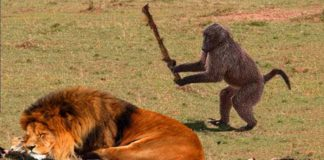 जानवरों के बारे में जानकारी facts about animals in hindi