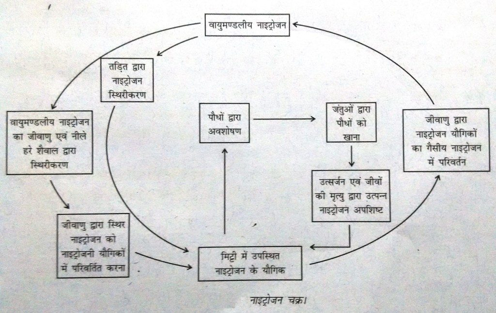 नाइट्रोजन चक्र चित्र nitrogen cycle diagram in hindi
