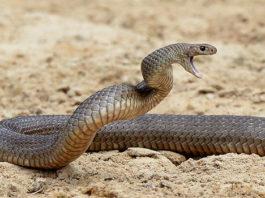 सांप के बारे में जानकारी facts about snake in hindi