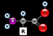 amino acid in hindi अमीनो एसिड के फायदे