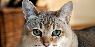 facts about cats in hindi