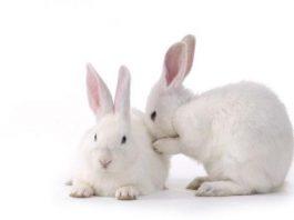 खरगोश के बारे में जानकारी facts about rabbits in hindi