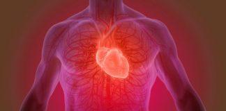 human heart in hindi