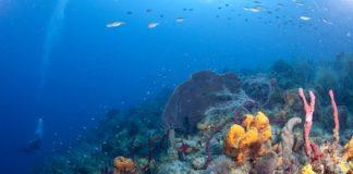 Aquatic ecosystem in hindi