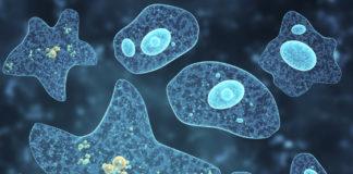 nutrition in amoeba in hindi अमीबा में पोषण