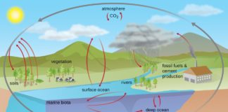 biogeochemical cycle in hindi