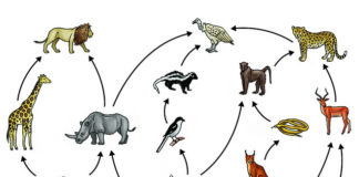 food chain in hindi
