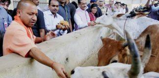 यूपी में हर गाय के लिए बनेगी गौशाला