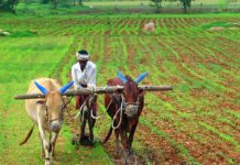महाराष्ट्र सरकार किसान