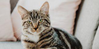 essay on my pet cat in hindi