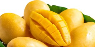 mango essay in hindi
