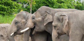 essay on zoo in hindi