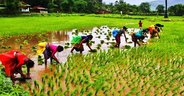 essay on agriculture in hindi