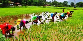 importance of agriculture in hindi