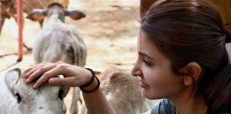 अनुष्का शर्मा ने पशु क्रूरता के खिलाफ शुरू किया #JusticeForAnimals अभियान