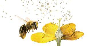 Pollination in hindi